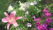флора и фауна_10