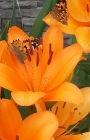 флора и фауна_1